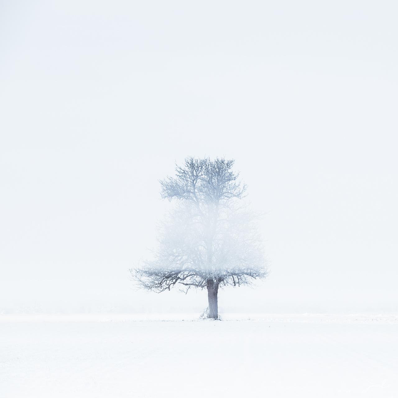 Signature de l'hiver II