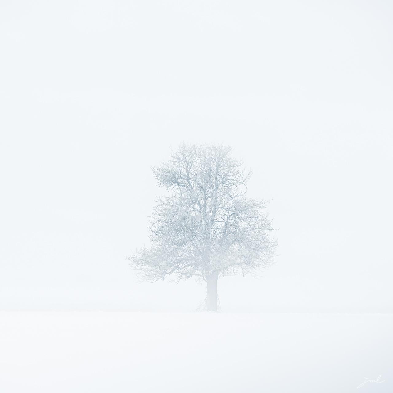 Signature de l'hiver I