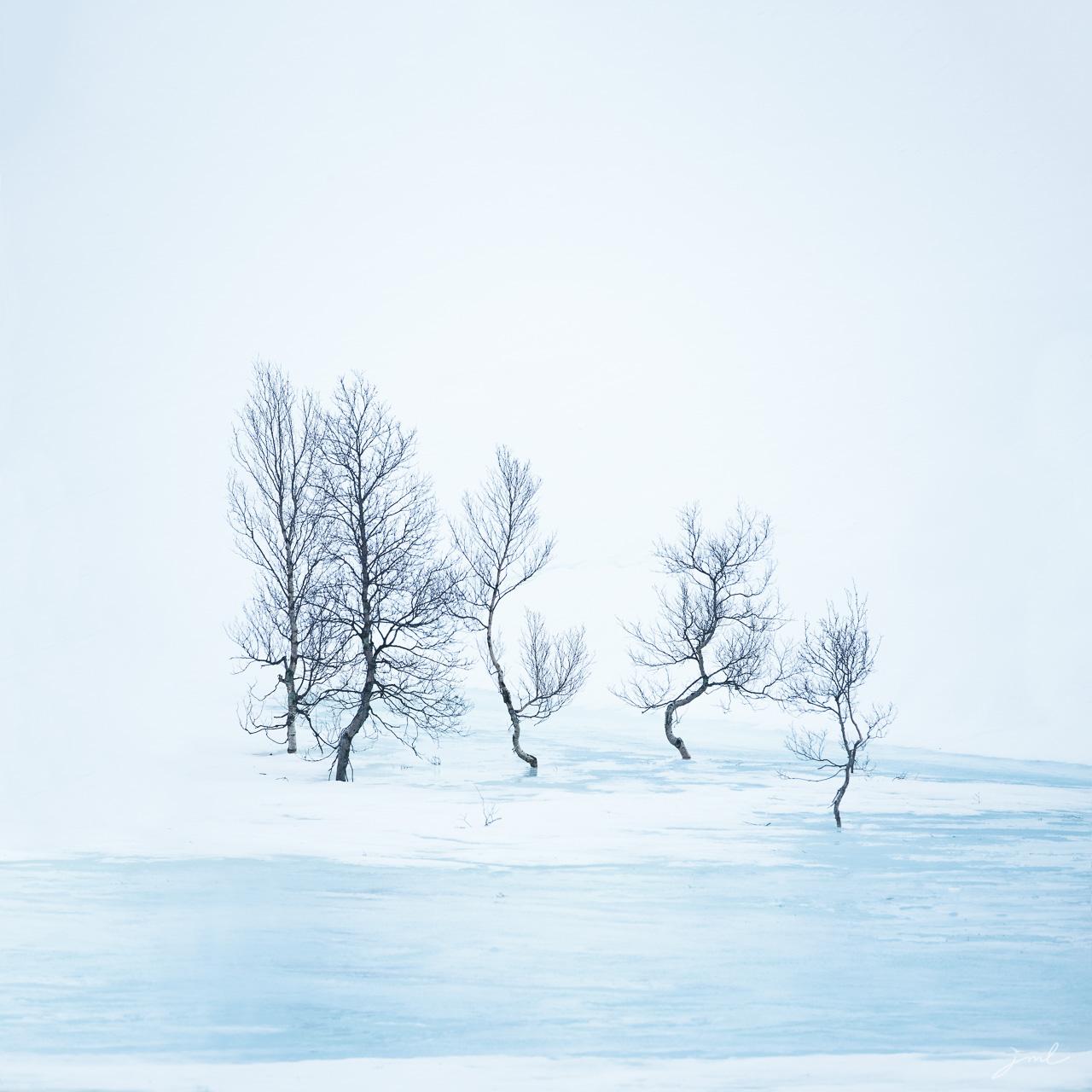 Silhouettes arctiques I